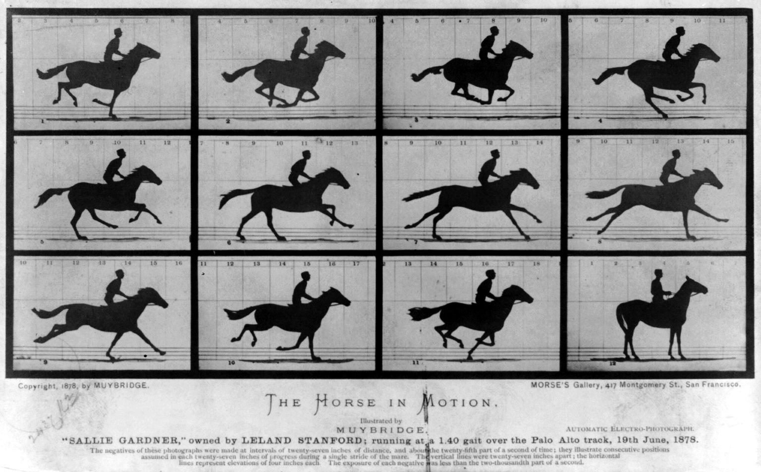 Muybridge Bullet Time Galloping Horse